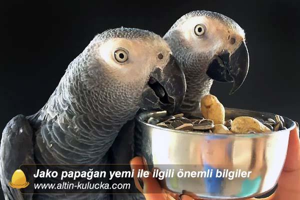 Jako papağan yemi ile ilgili önemli bilgiler