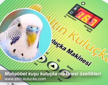 Muhabbet kuşu kuluçka makinesi özellikleri