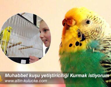 Muhabbet kuşu yetiştiriciliği Kurmak istiyorum