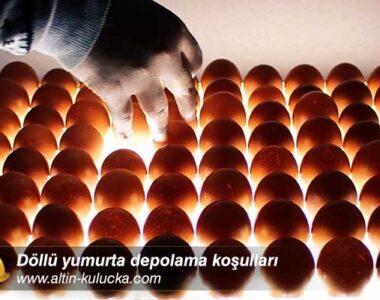 Döllü yumurta depolama koşulları