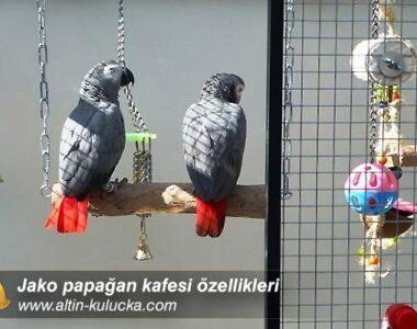 Jako papağan kafesi özellikleri