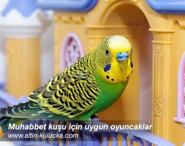 Muhabbet kuşu için uygun oyuncaklar
