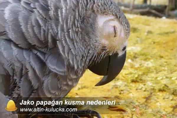 Jako papağan kusma nedenleri