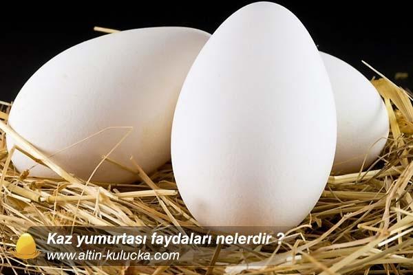 Kaz yumurtası faydaları nelerdir ?