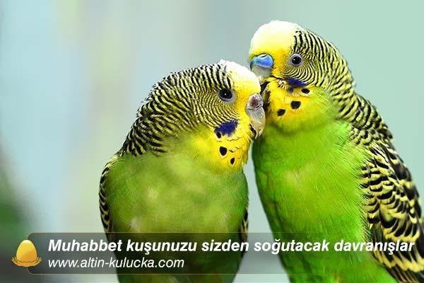 muhabbet kuşlarına karşı yapmamanız gereken davranışlar