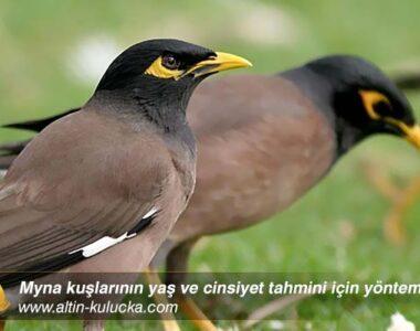 Myna kuşlarının yaş ve cinsiyet tahmini için yöntemler